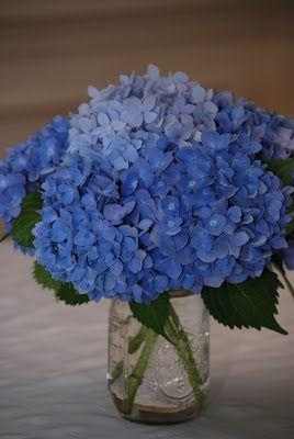 Blue hydrangea centerpieces in mason jars