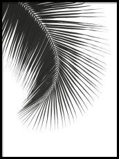 Fotokonst | svartvita fotografier | Desenio.se