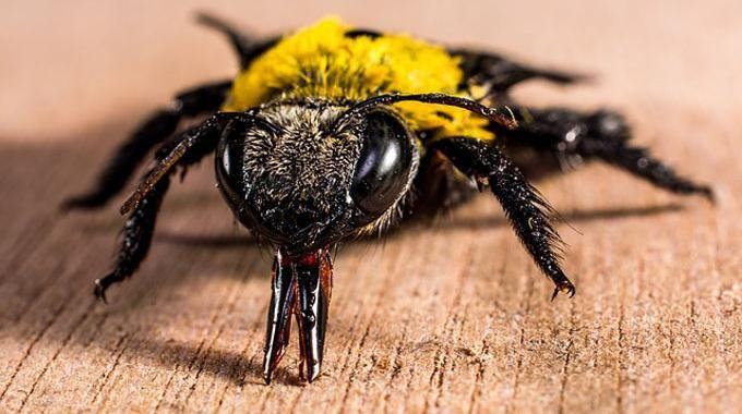les 25 meilleures id es de la cat gorie repousser les mouches sur pinterest plantes. Black Bedroom Furniture Sets. Home Design Ideas