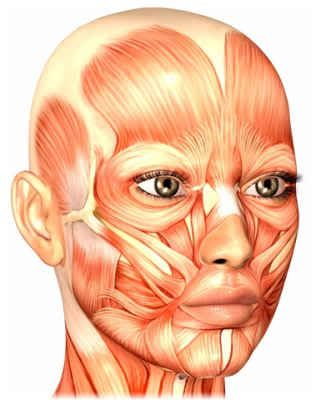 muscles of the face support the skin and allow you to make facial expressions.