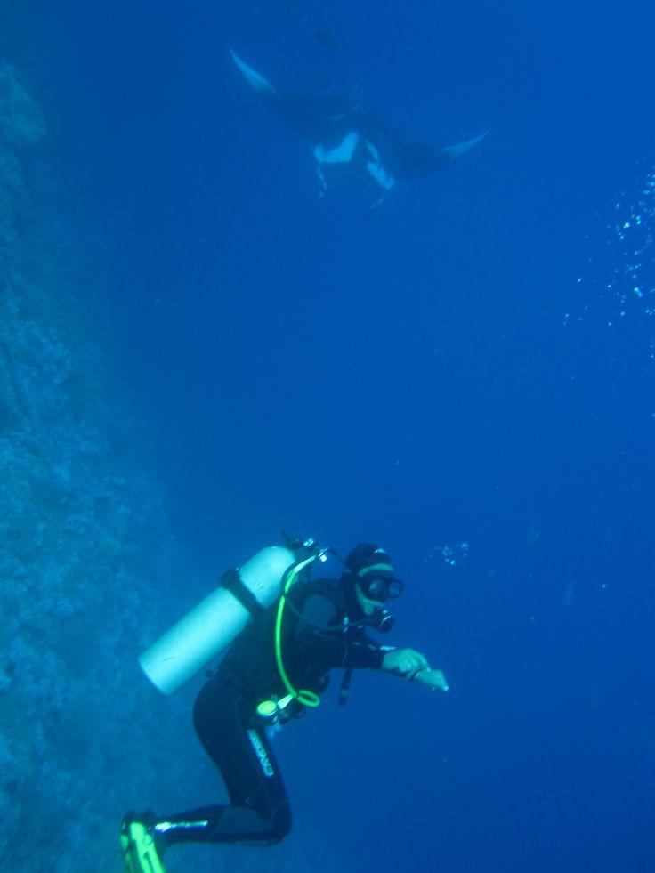 Diver meets manta ray at Daedalus Reef - Red Sea