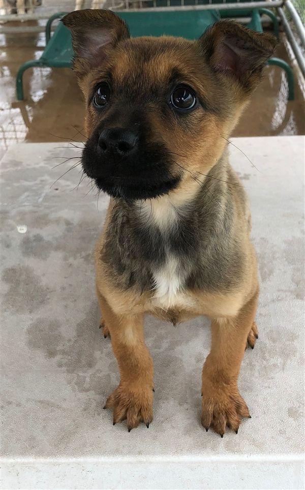 Kiesha Rspca Adopt A Pet Pets Puppy School Best Dogs