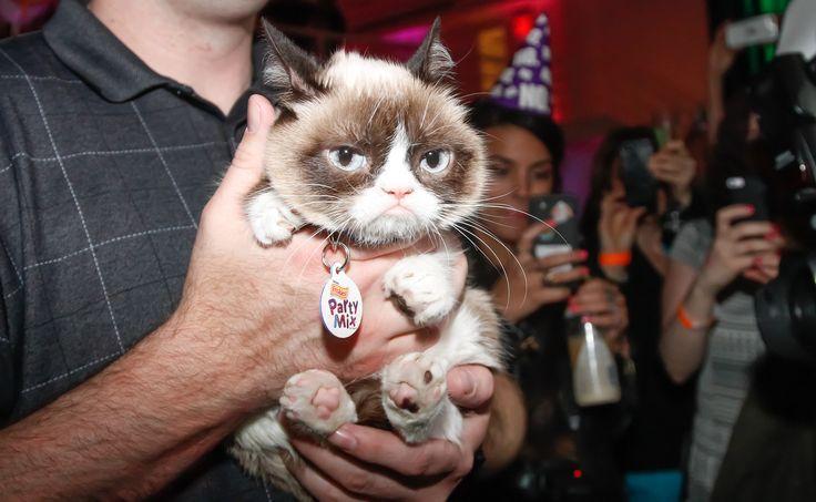 Grumpy Cat Meme Generator | POPSUGAR Tech