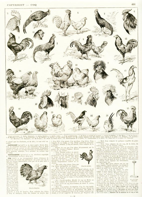 1936 Vintage chicken poster Cockerel art by FrenchVintagePrints