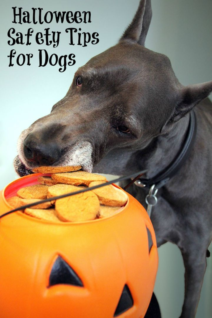 These Halloween safety tips for dogs will help keep your pooch safe this Halloween. With these Halloween safety tips, you can keep your dog safe and sound.