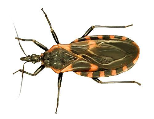 78 best images about patrick 39 s pest control on pinterest ants ticks and carpenter bee. Black Bedroom Furniture Sets. Home Design Ideas