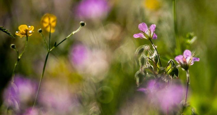 Focusing - Tarkennus by Pauliina Kuikka and Arto Lehikoinen Photography