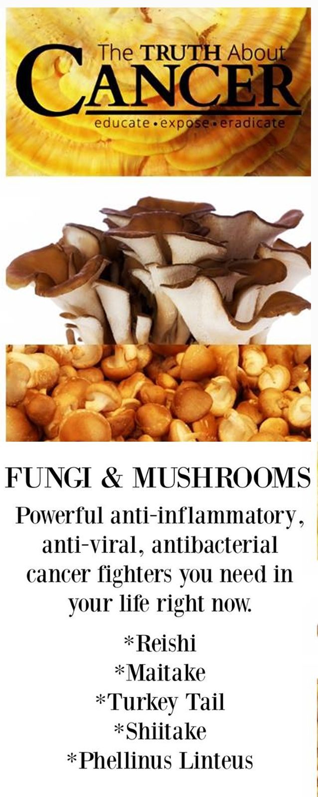 These five mushrooms have boost immunity and are naturally anti-viral, anti-inflammatory, antioxidant, antibacterial, and anti-cancer!  Join us on The Truth About Cancer for more great info!