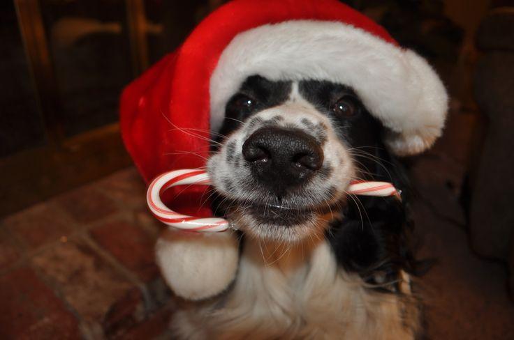Christmas Pet Photography <3