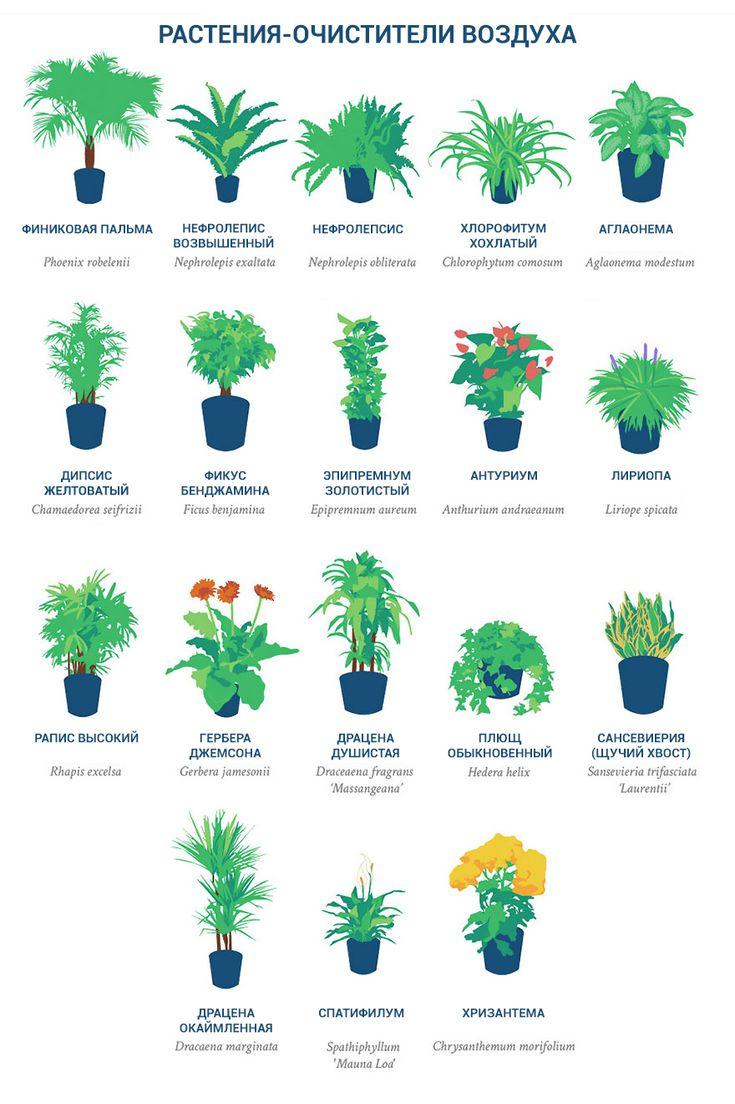 НАСА опубликовала список самых лучших растений-очистителей воздуха. Они должны быть в каждой квартире! | Новости | Всеукраинская ассоциация пенсионеров
