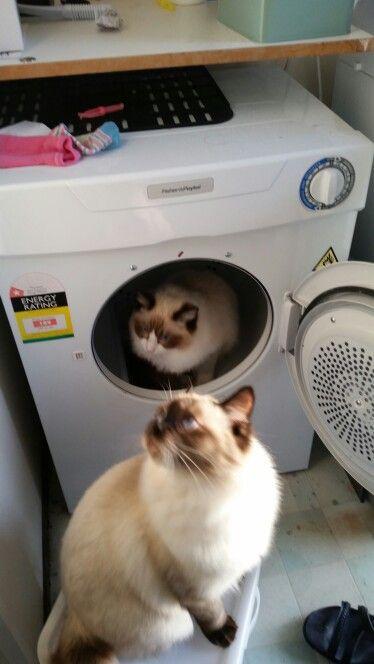 Cat abuse?