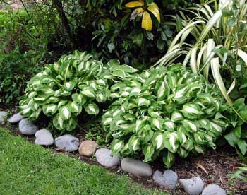 Hosta Garden Designs love these ferns and hostas for a shady location Google Image Result For Httpimagesmooseyscountrygardencomgardening