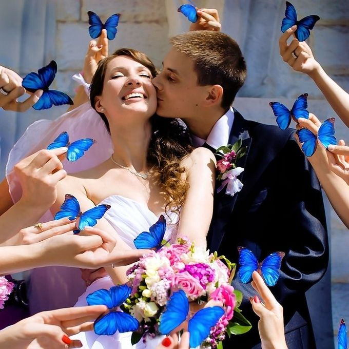 Бабочки в оформлении свадьбы : 24 сообщений : Блоги невест на Невеста.info