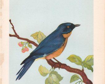 Vintage vogel afdrukken,