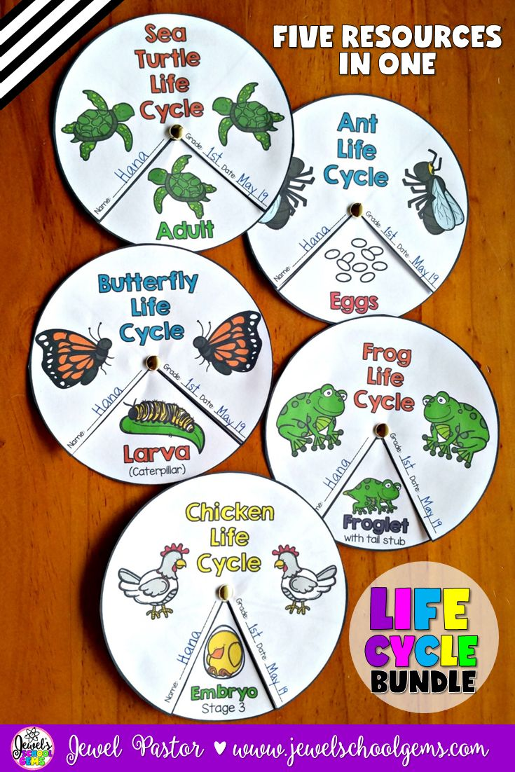 Animal Life Cycle Crafts