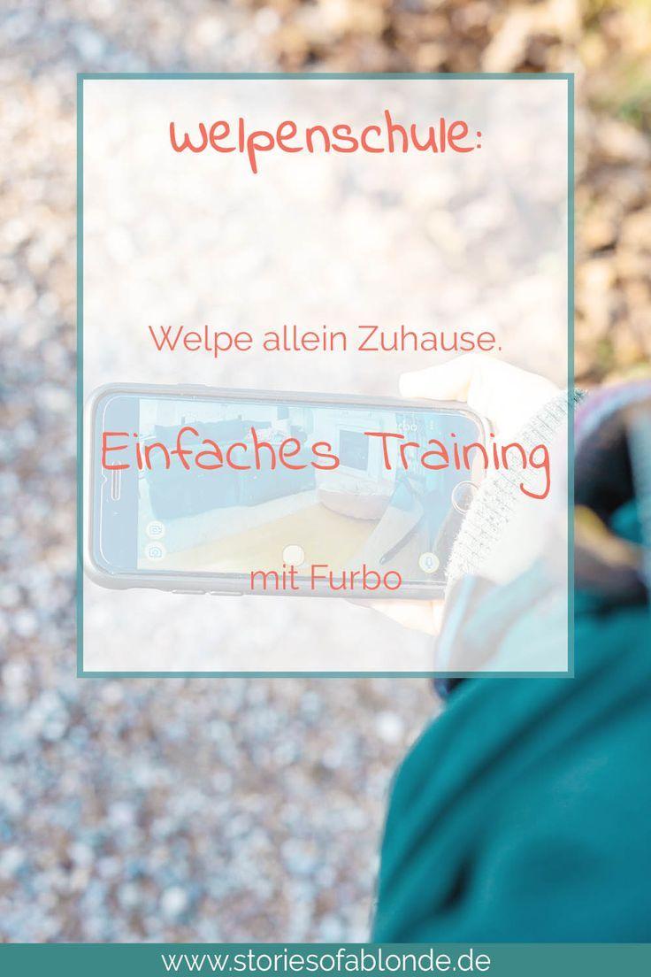 Welpen Alleine Lassen Einfaches Training Mit Furbo Welpen