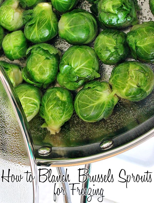 How to blanch Brussels Sprouts for shocking and flash freezing. Enjoy fresh Brussels Sprouts any time of the year!
