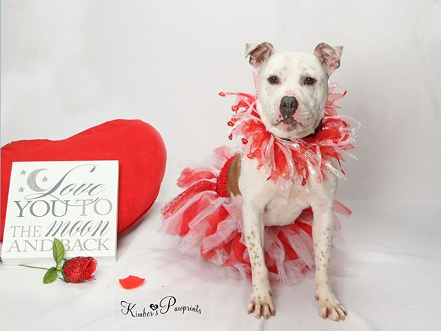 Georgia Is One Of The Diamond Dogs Here At Nhs Yes That Means That She Is A Gem Of A Dog She Just Needs Some Polish Th Diamond Dogs Dog