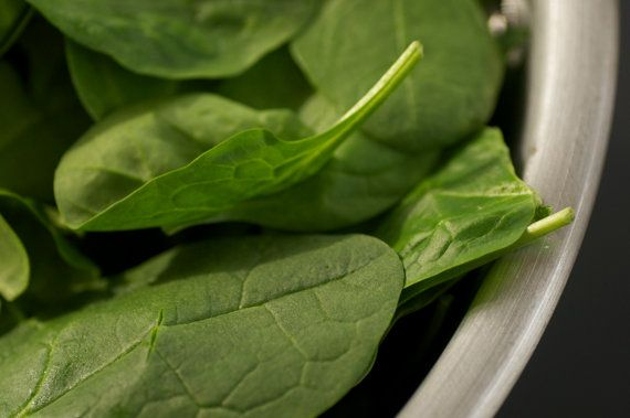 Organic Spinach Seeds via @Laura Watt