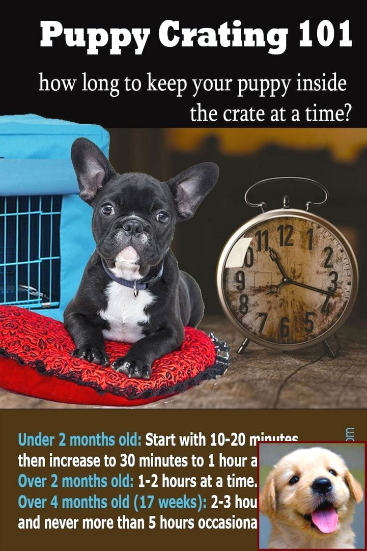 House Training A Puppy Crate Method And Dog Training Classes Stoke