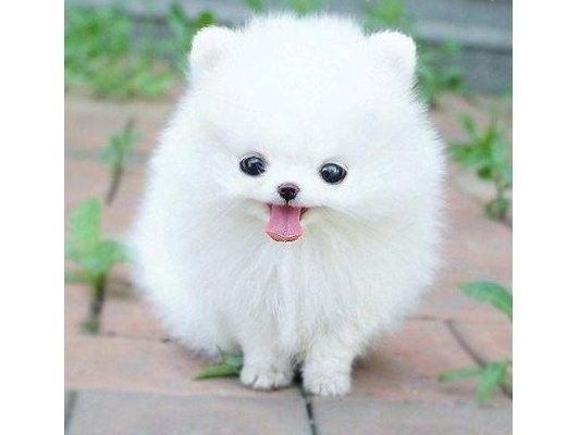 Cotton Ball Puppies Baby