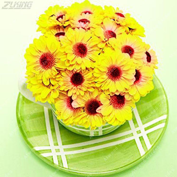 ZLKING 200 PCS Italian Daisy Cheap Yellow Chrysanthemum Flowers Bonsai Seeds Beautiful Exotic Fast Growing Garden Indoor Plants  #Affiliate