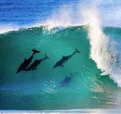 North Stradbroke Island, Queensland, Australia: Queensland Beaches, Surf Paradise, Beaches House, Waves Ocean Dolphins, Byron Bays, Body Surfing, Australia, North Stradbrok Islands, The Waves