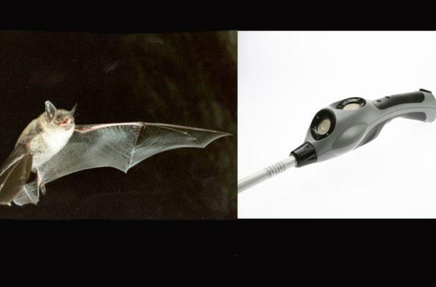L'écholocalisation des chauves-souris a inspiré la création du manchon d'une canne pour les non-voyants qui vibre afin de signaler les obstacles.