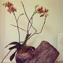 Bloodwood Botanica | Orchid Sculpture Phalaenopsis Orchid finds its home in a reclaimed log