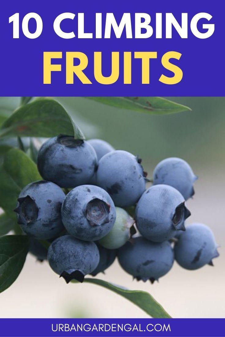 10 Climbing Fruit Plants In 2020 Fruit Plants Fruit 400 x 300
