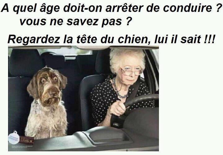 At what age should one quit driving? You don't know? Look at the dog's face...he knows!