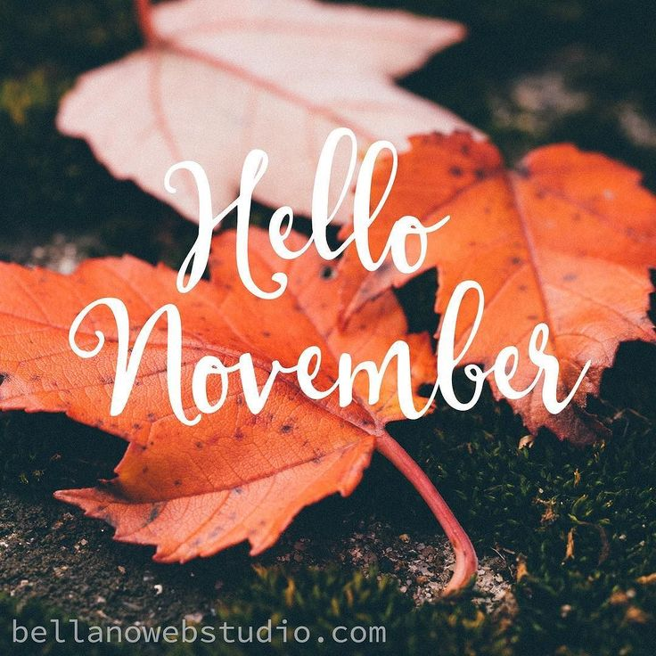 Why hello November how did you get here so fast? Anyone else absolutely flabbergasted at how fast the year is flying by? The new year will be here before we know it. But I plan to enjoy and savour every last minute of the holiday season and all the fun.   It's not too late to get your Website ready for the new year. I have a couple remaining spots for 2016 that will get your site ready with a fresh new look or your new business up and launched. Link in profile or just tap on the contact…