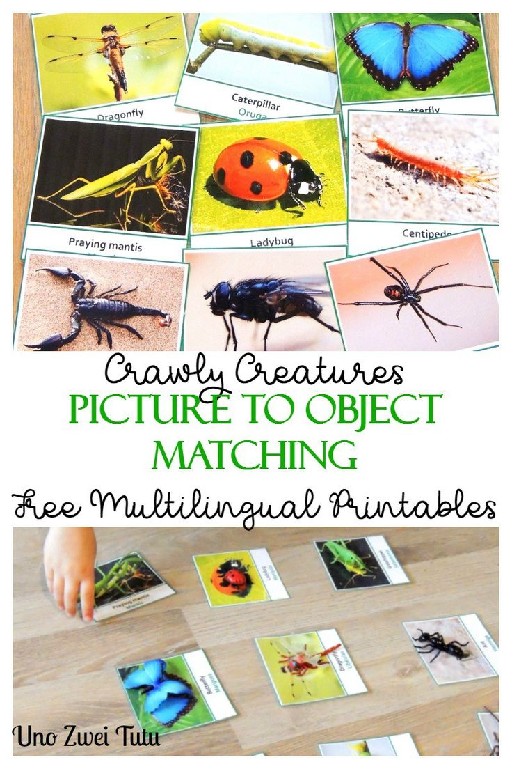 Insects Picture to Object Matching: A fun, easy and hands-on activity to teach toddlers and preschoolers about insects and other crawly creatures. With Free Multilingual Montessori printable 3 part cards.