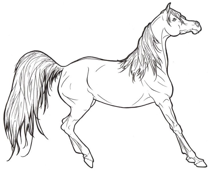 the horse coloring book is the perfect gift for kids of all ages preschoolers as