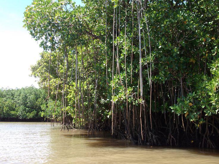 #Travel: Mangroves, #Fiji. Photo credit: D Rudman
