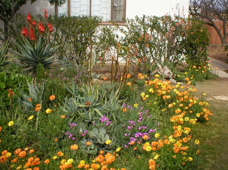 South African Garden Ideas Above Left The Gazanias Has Been Cultivated In  Many Colors They 1197x893