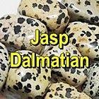 JASP DALMATIAN