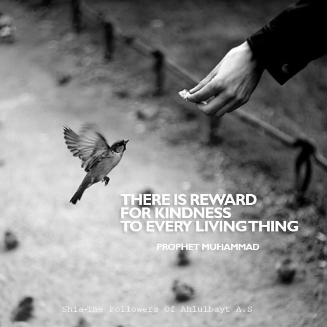 """ There is reward for kindness to every living thing.""  — Prophet Muhammad (ص)"