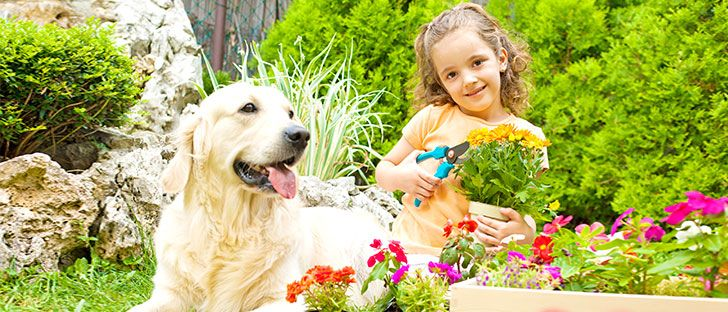 Dog Friendly Backyard Makeover :  Tips on Pinterest  Gardens, Garden makeover and Herbs garden