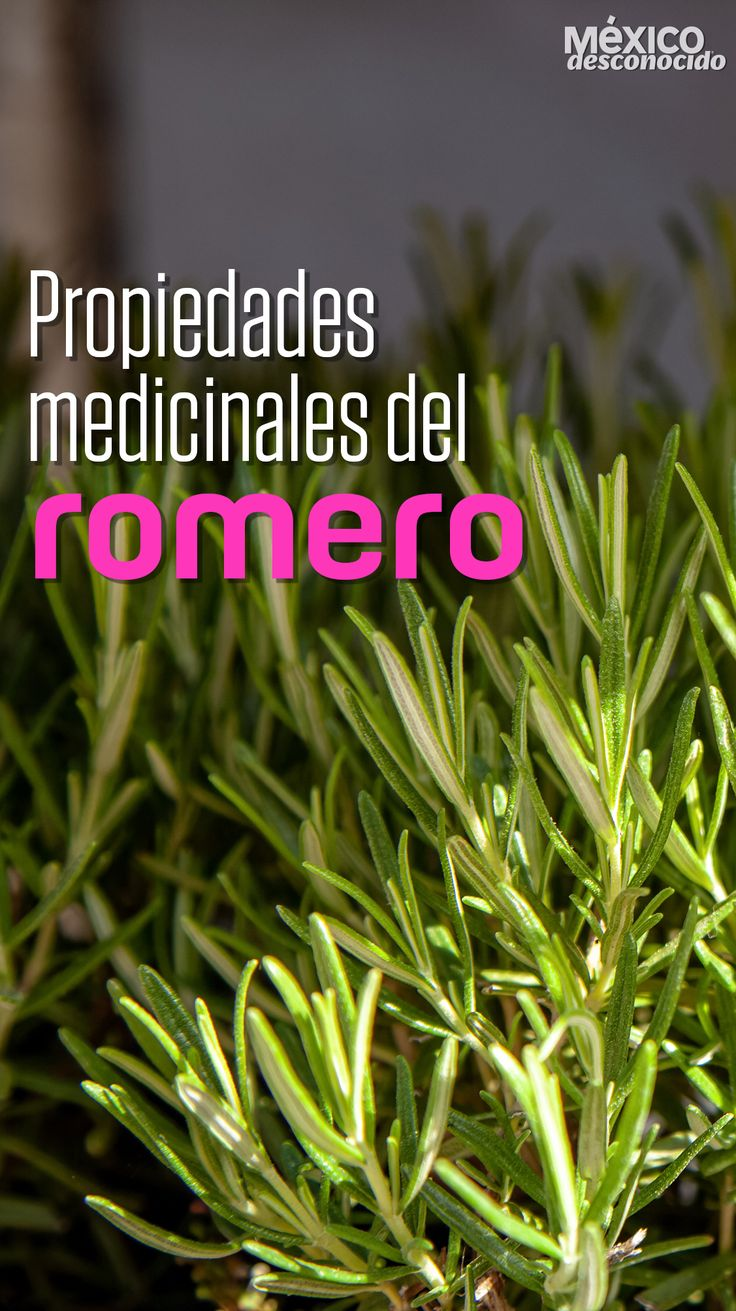Salud Natural, Healing Herbs, Herbal Medicine, Herbalism, Healthy Recipes, Tips, Nature, Patio, Gardens