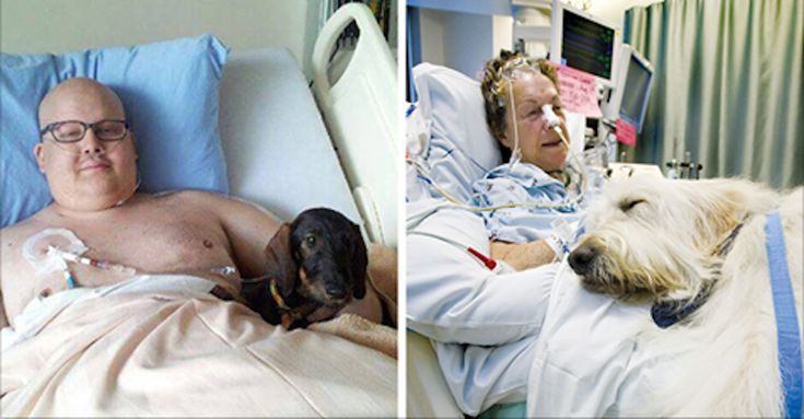 Juravinski hospital in Ontario, Canada allows pets to visit their seriously ill humans. The hospital adopted a program called Zachary's Paws for Healing, launched by Donna Jenkins. She was inspired…