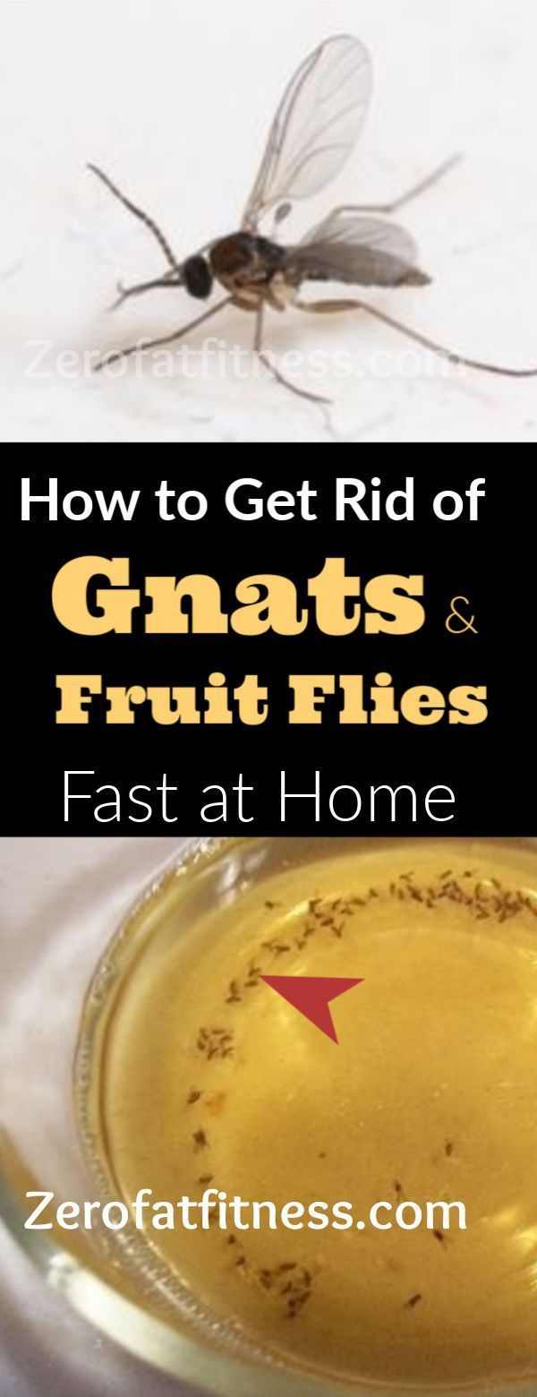 How To Get Rid Of Gnats And Fruit Flies Fast In Your House
