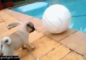 funny gifs | funny-gifs-puppy-fail