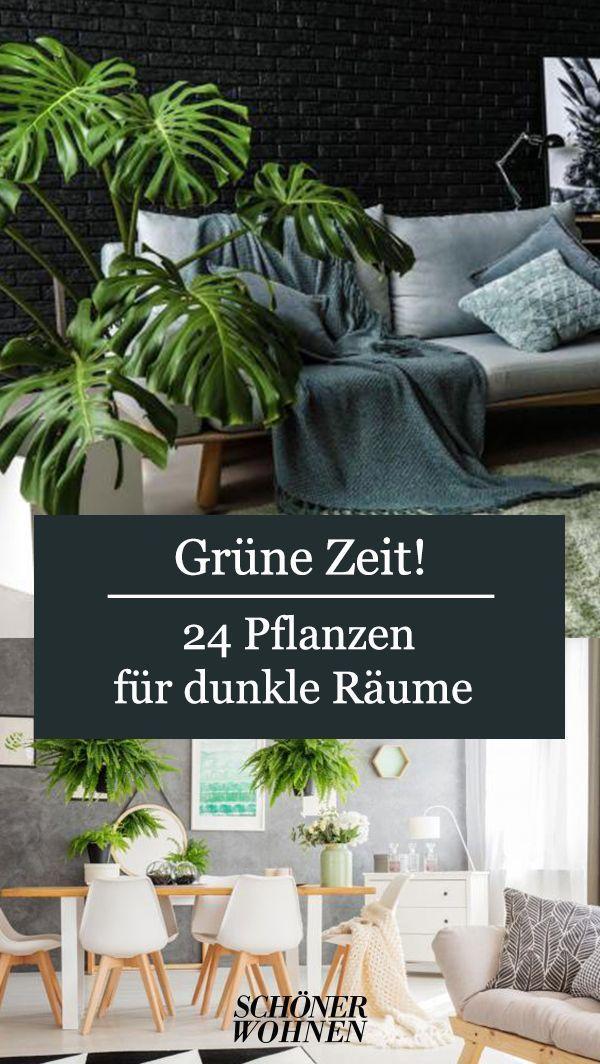 Schwertfarn Unbedingt Giessen Bild 6 In 2020 Pflanzen Fur Dunkle Raume Dunkle Raume Zimmerpflanzen Dekor