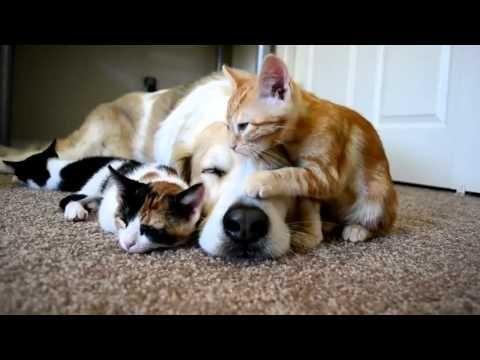 Una perra adopta a unos gatitos... ¿Quién dijo que perros y gatos se llevan mal?