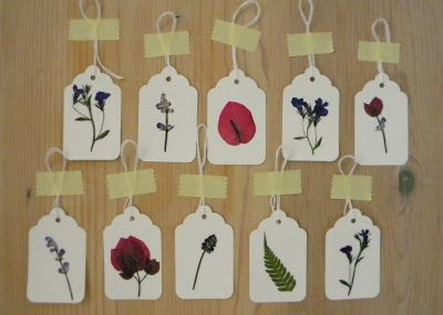homework: creative inspiration for home and life: Inkling: pressed flowers and plant updates