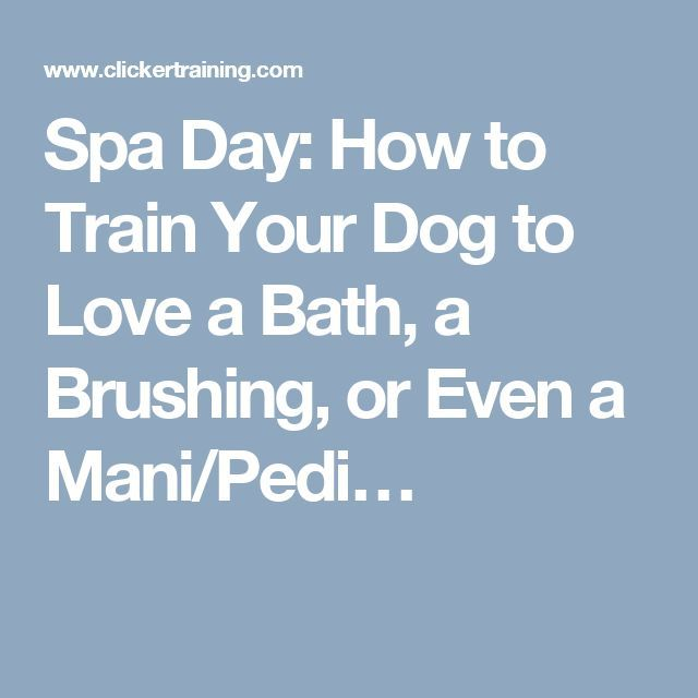 Spa Day: How to Train Your Dog to Love a Bath, a Brushing, or Even a Mani/Pedi… Pet Accessories, Dog Toys, Cat Toys, Pet Tric