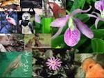 flora y fauna En botánica, flora se refiere al conjunto de las plantas que pueblan una región (por ejemplo un continente, clima, sierra, etc.), la descripción de éstas, su abundancia, los períodos de floración