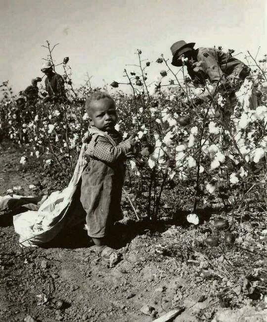 African child enslaved in a cotton field, USA
