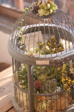 birdcage w succulents
